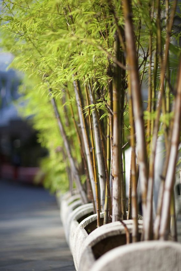 bamboo-for-styling-your-home44