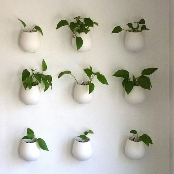 decorate-home-with-plants11