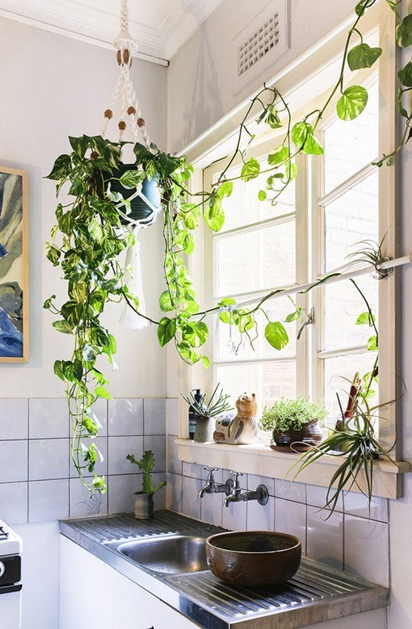 decorate-home-with-plants21