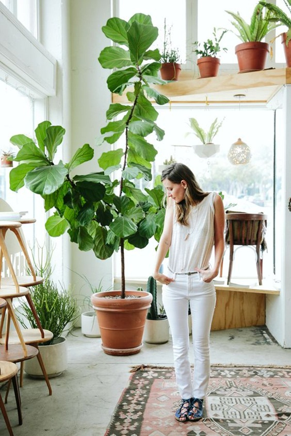 decorate-home-with-plants24