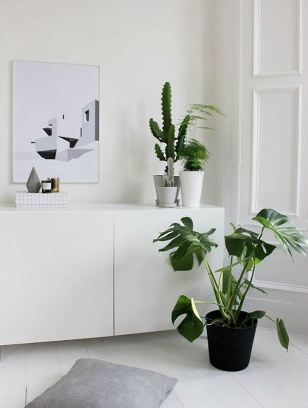 decorate-home-with-plants46