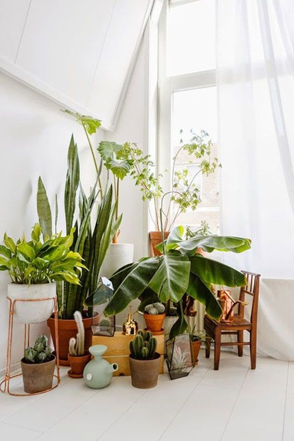 decorate-home-with-plants48