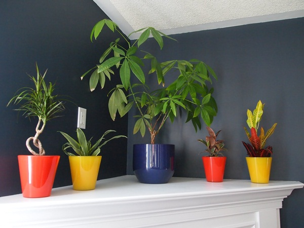 decorate-home-with-plants8